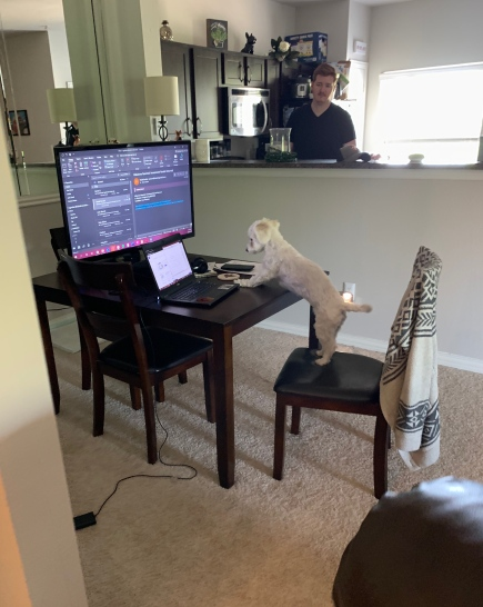 """Ellie's version of """"working from home"""""""