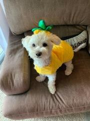 Pineapple Ellie on National Pineapple Day